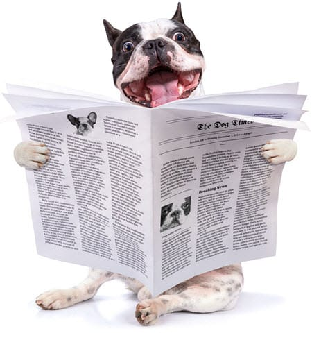 subscription newsletter frenchiemania