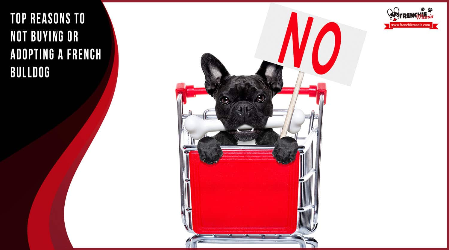 reasons not to buy french bulldog dog