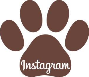 redes sociales frenchiemania instagram