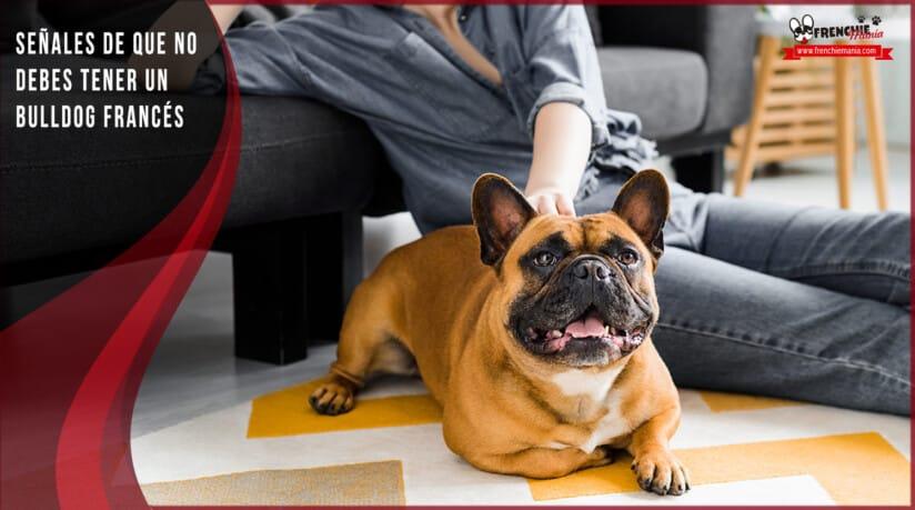 razones para no tener bulldog frances