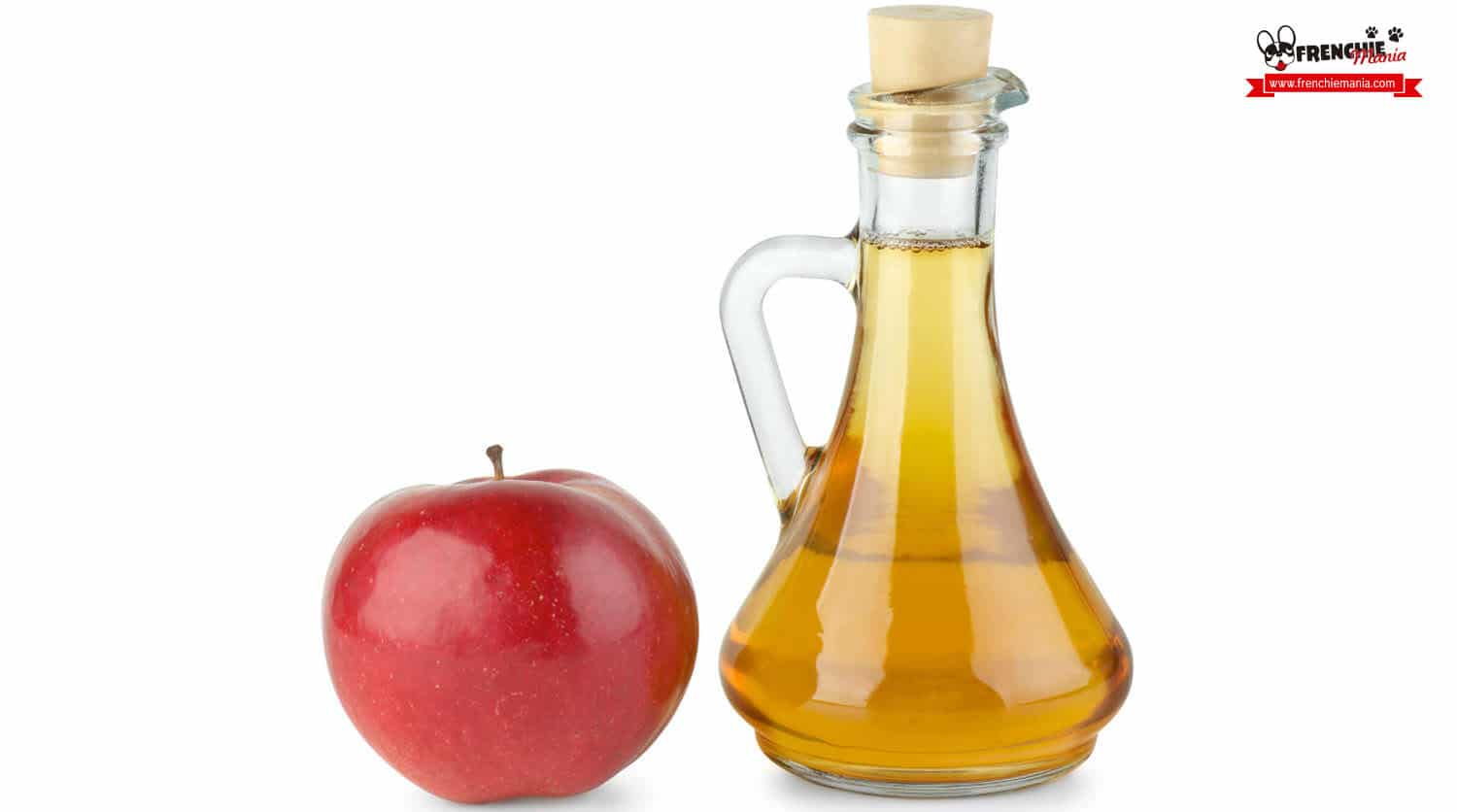 home remedies itching dog apple vinegar
