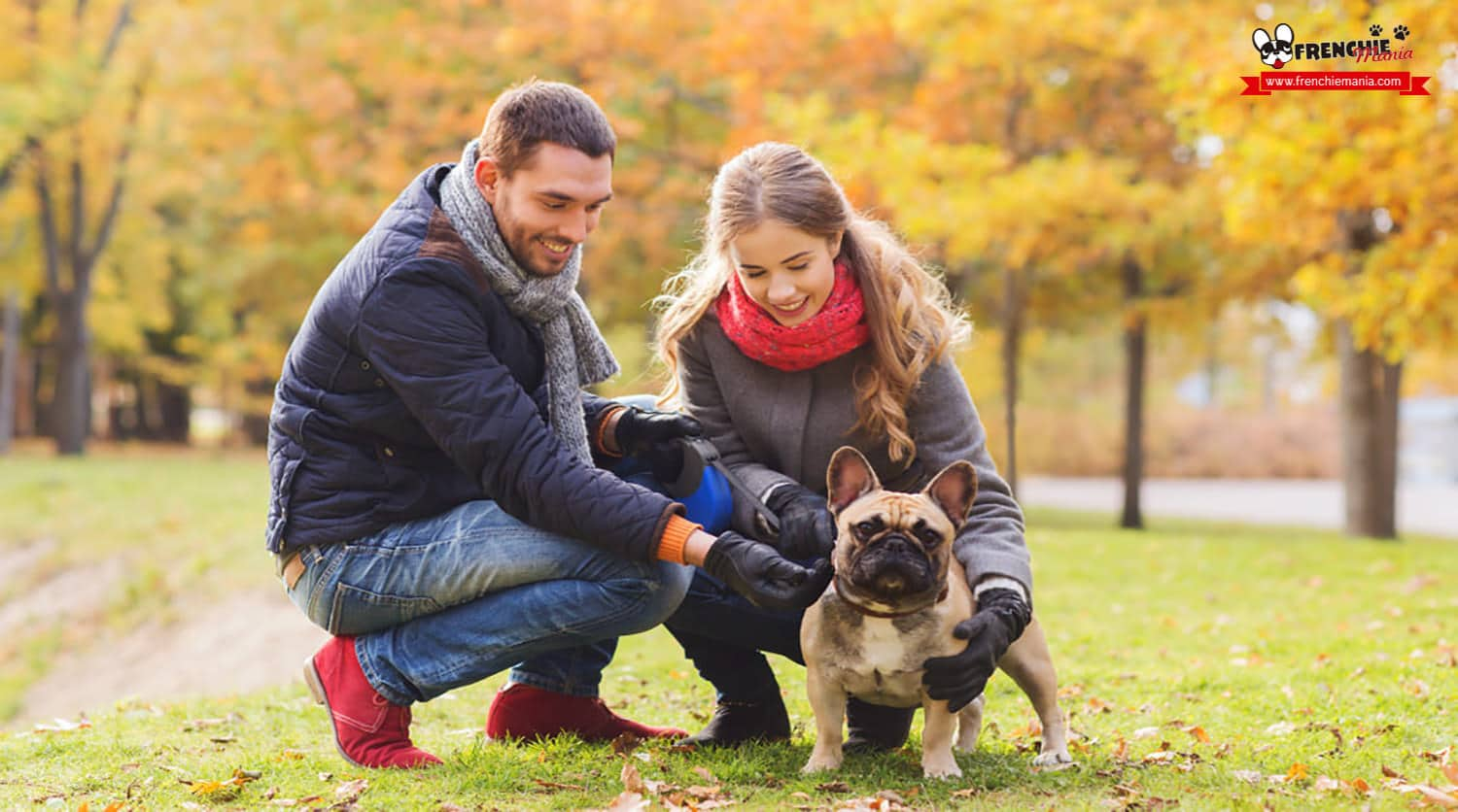reasons to buy french bulldog dog family