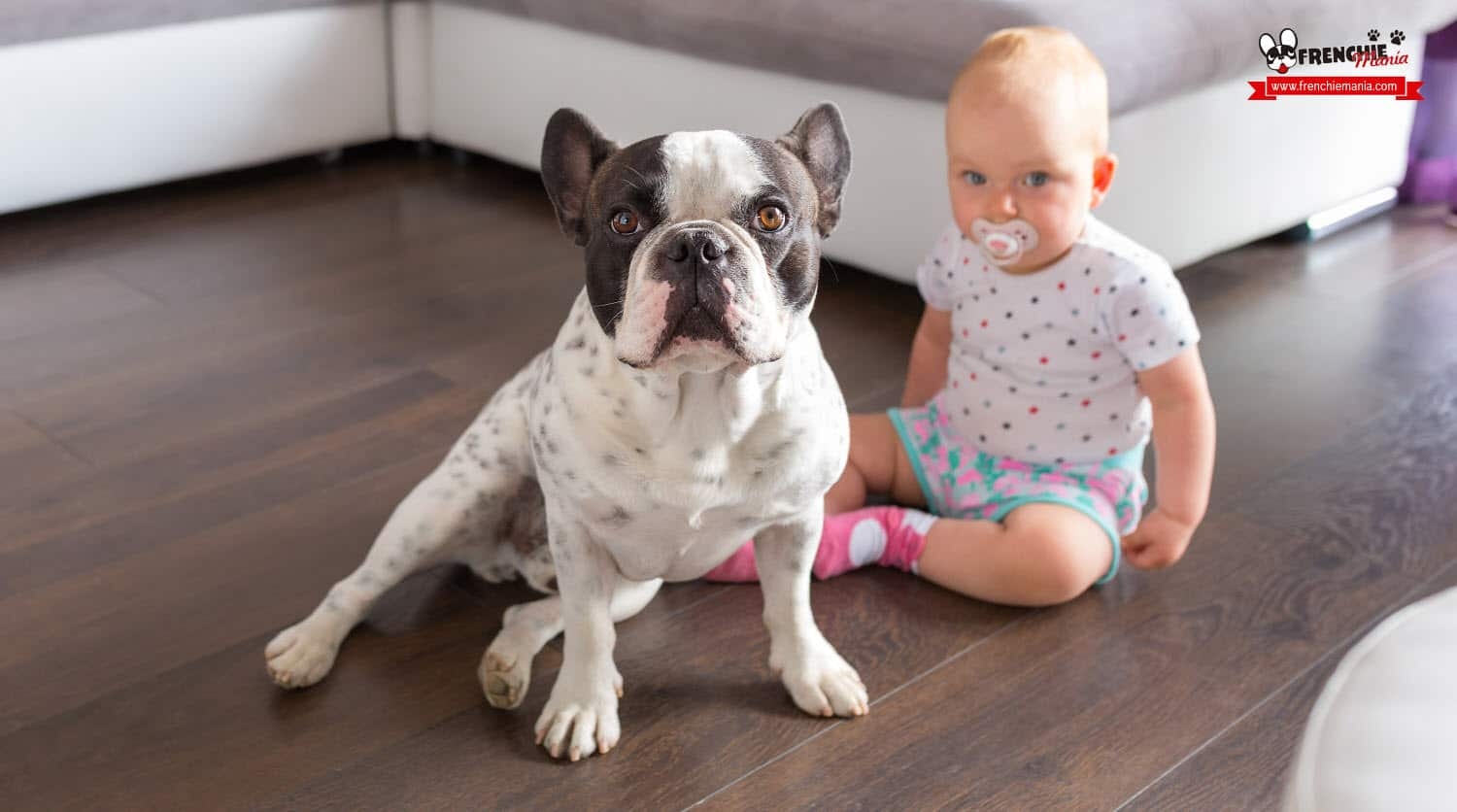 reasons to buy french bulldog dog kids babies
