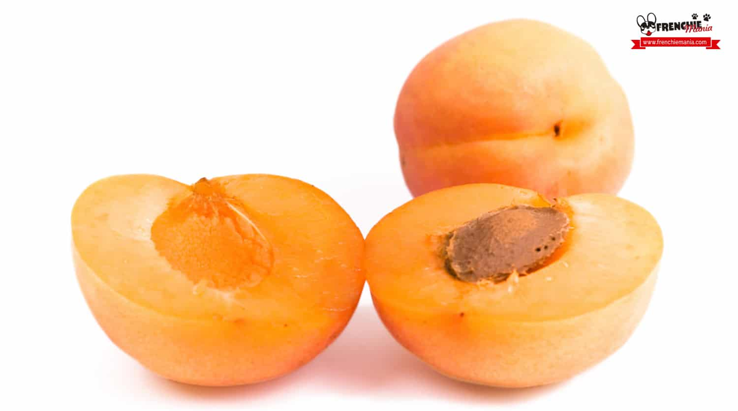 fruits for dogs apricot