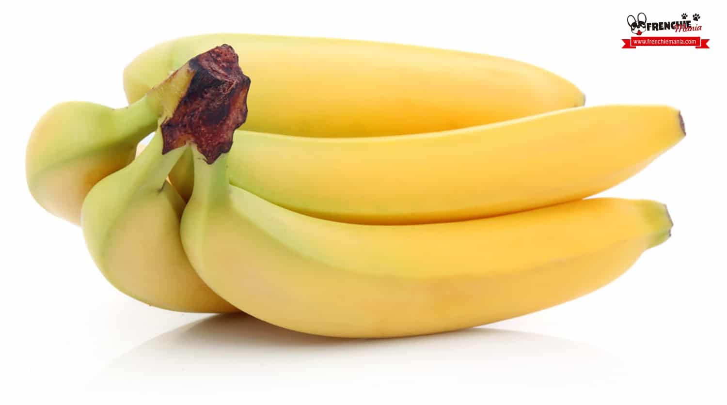 fruits for dogs banana