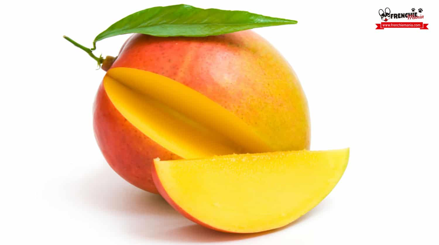 fruits for dogs mango