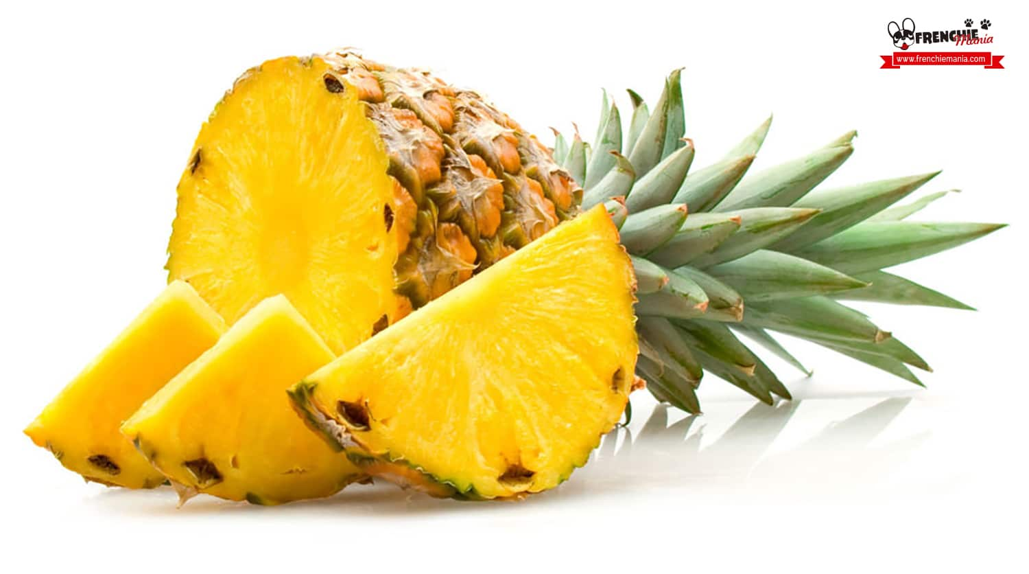 fruits for dogs pinneapple