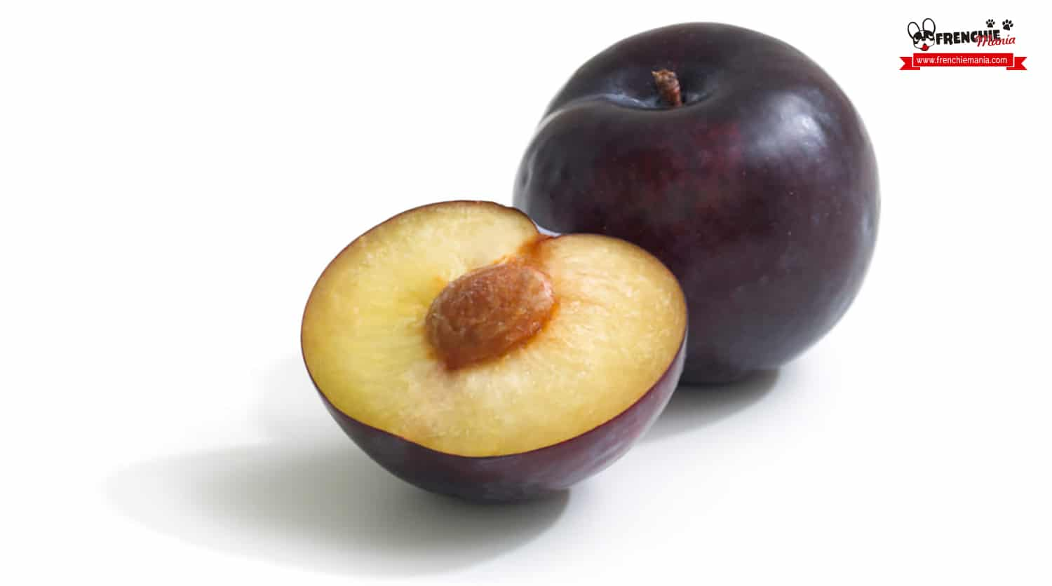 fruits for dogs plum