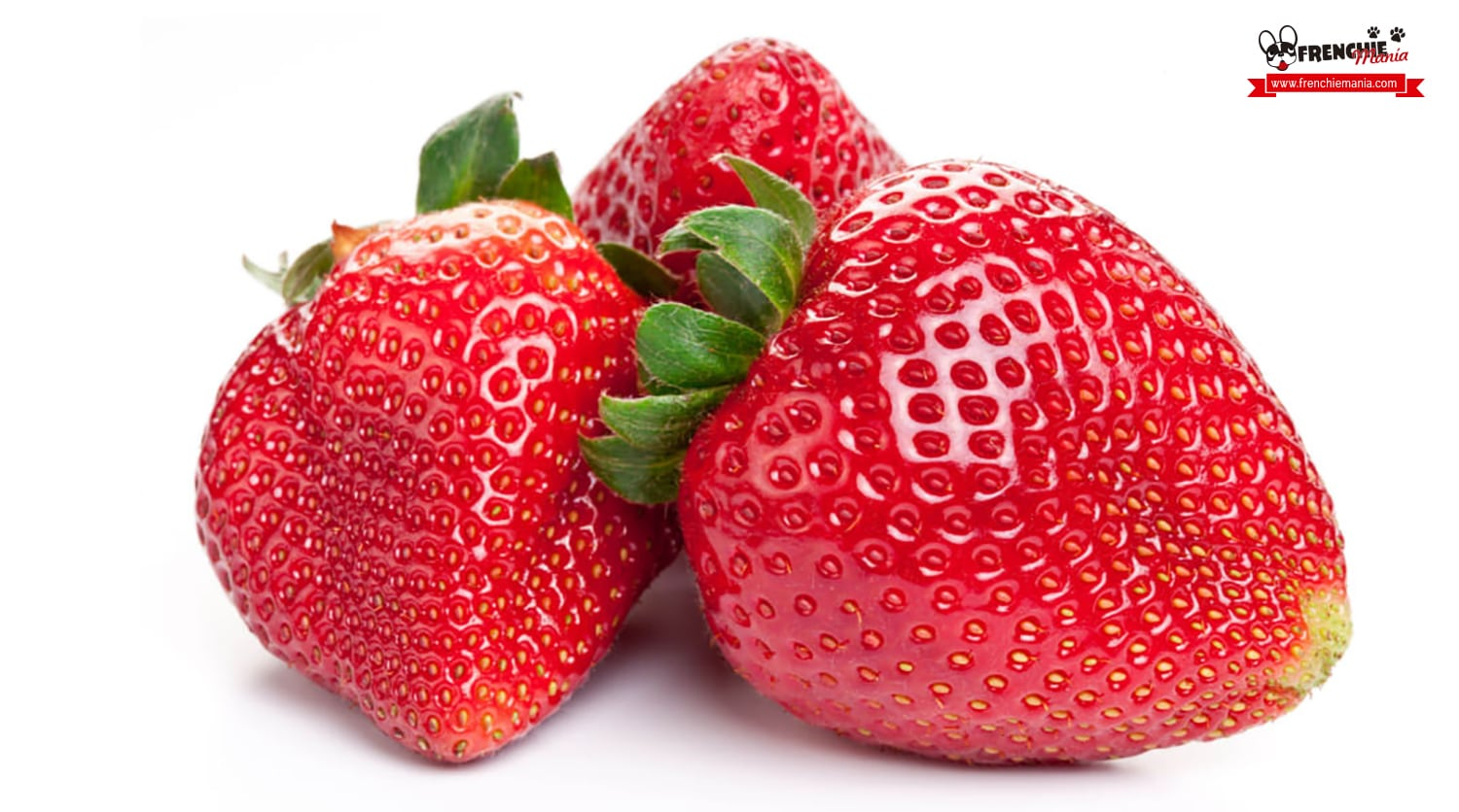 fruits for dogs strawberry