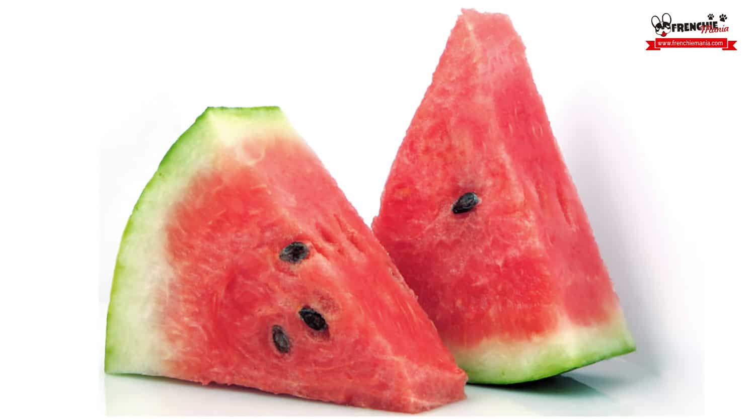 fruits for dogs watermelon