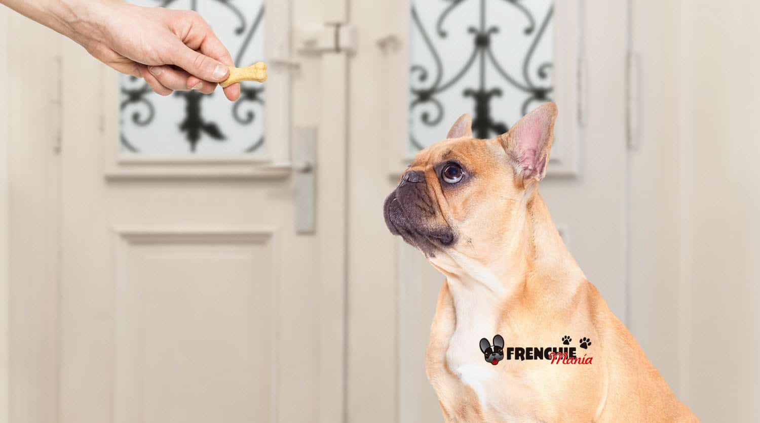 mistakes feeding french bulldog dog treat