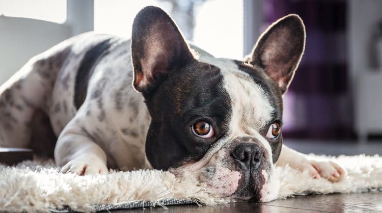 tips for cleaning up pet hair