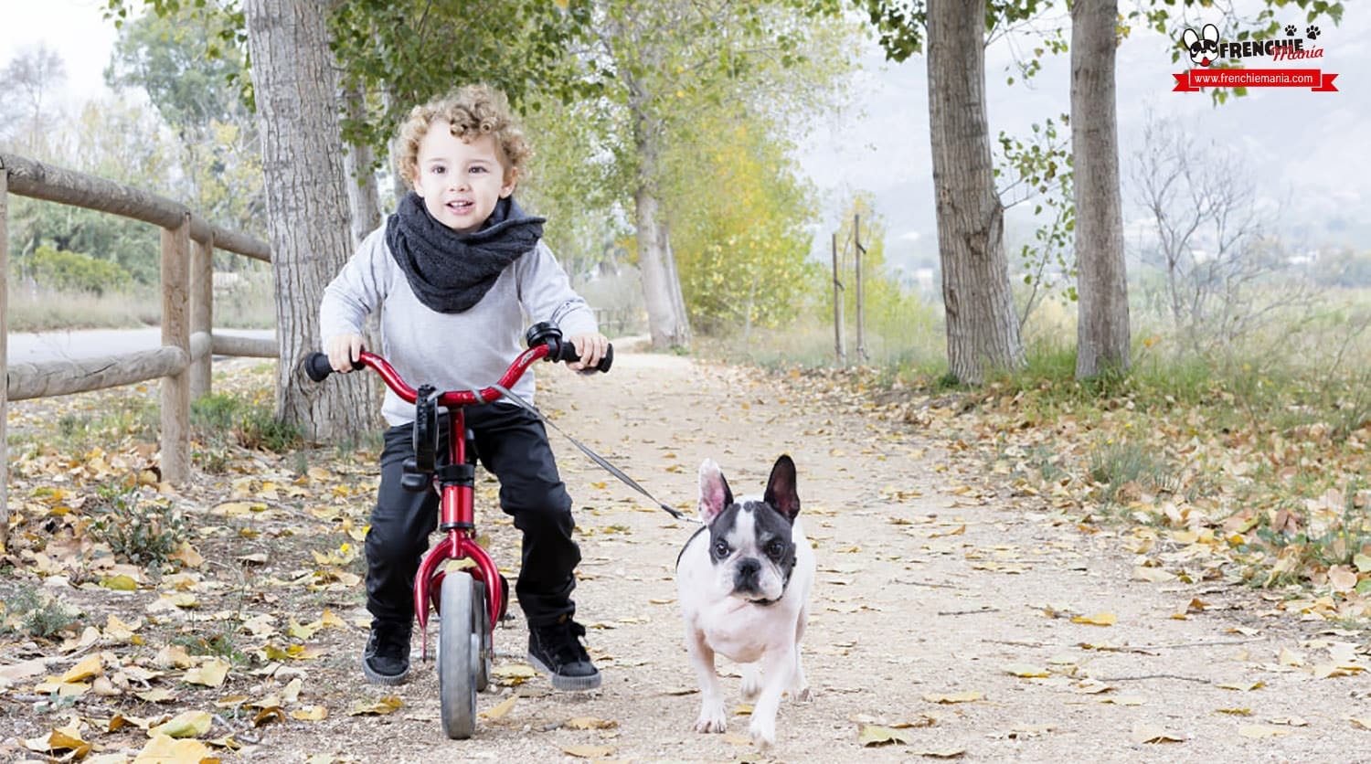 french bulldog babies children features