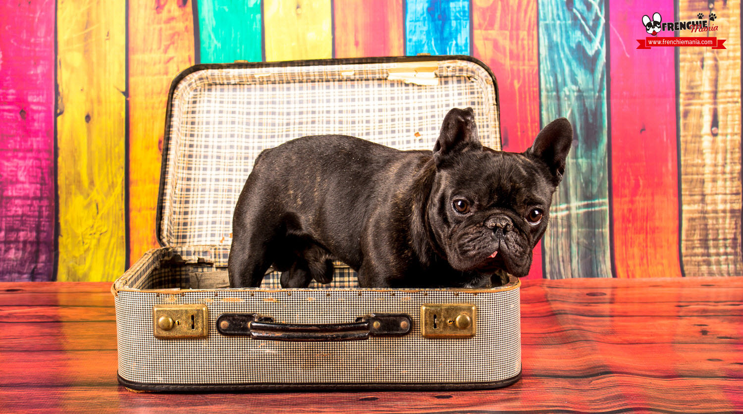 tips traveling with dogs airplane pet transport