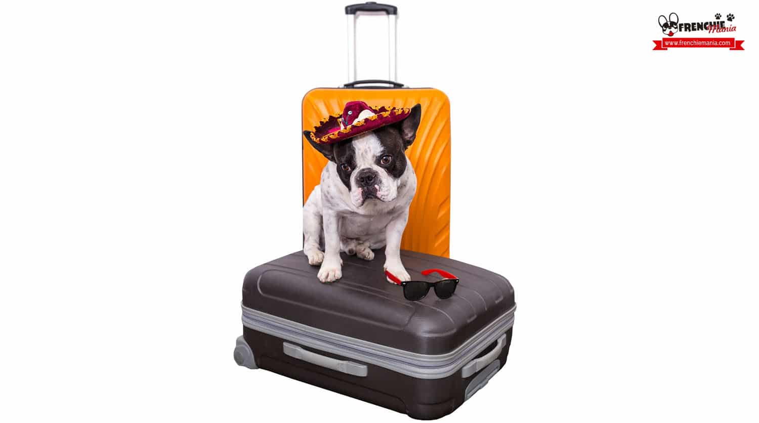 tips traveling with dogs airplane preparation