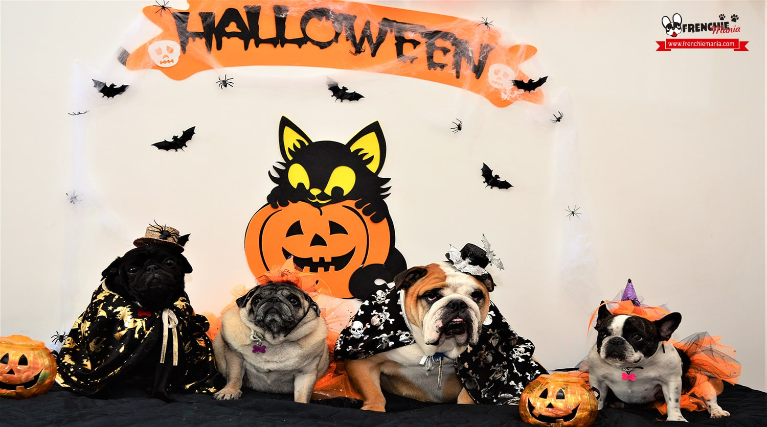 planes halloween bulldog frances