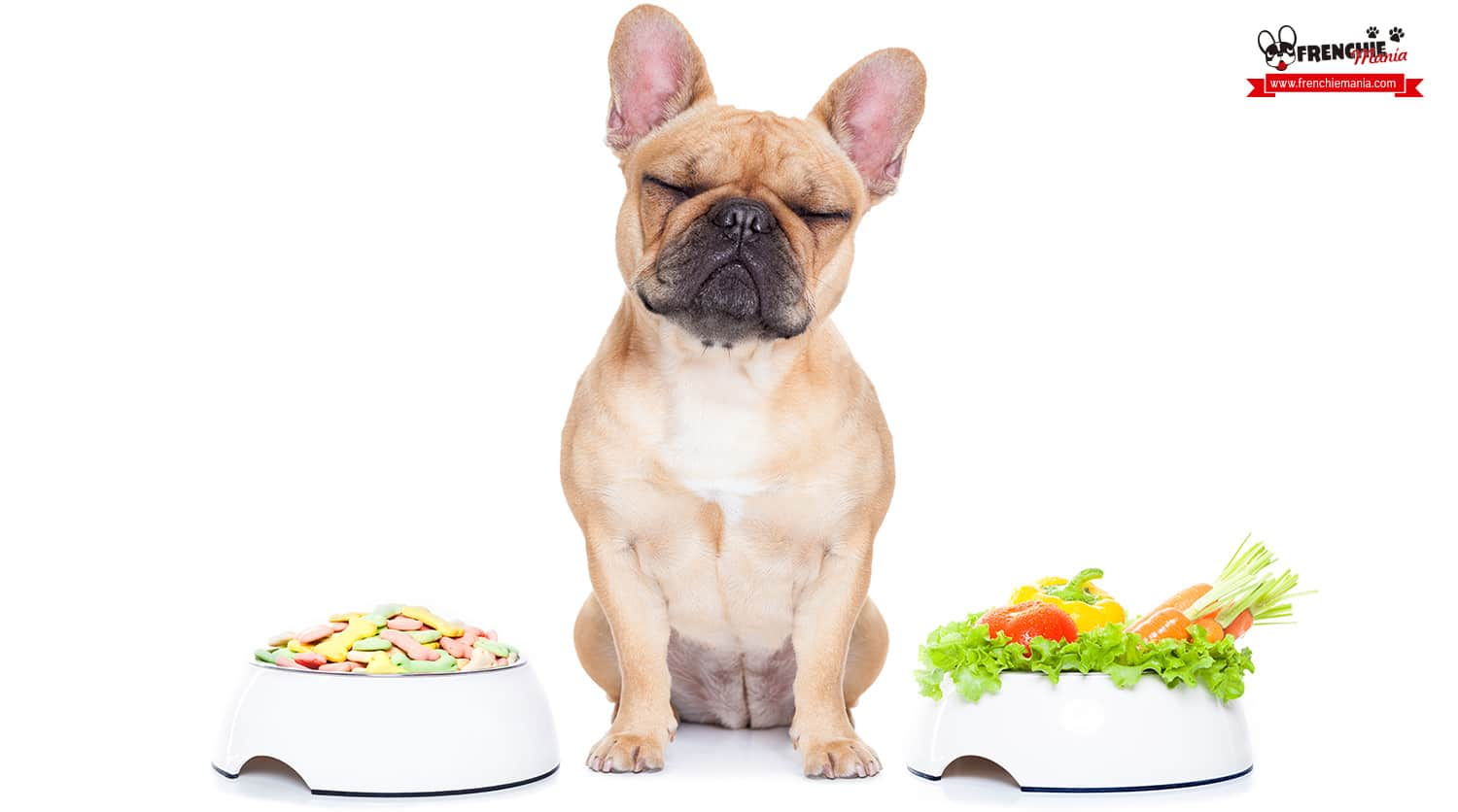 how to clean your dogs eyes healthy diet