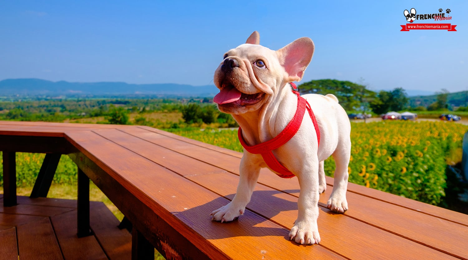 prevent heat stroke in dogs