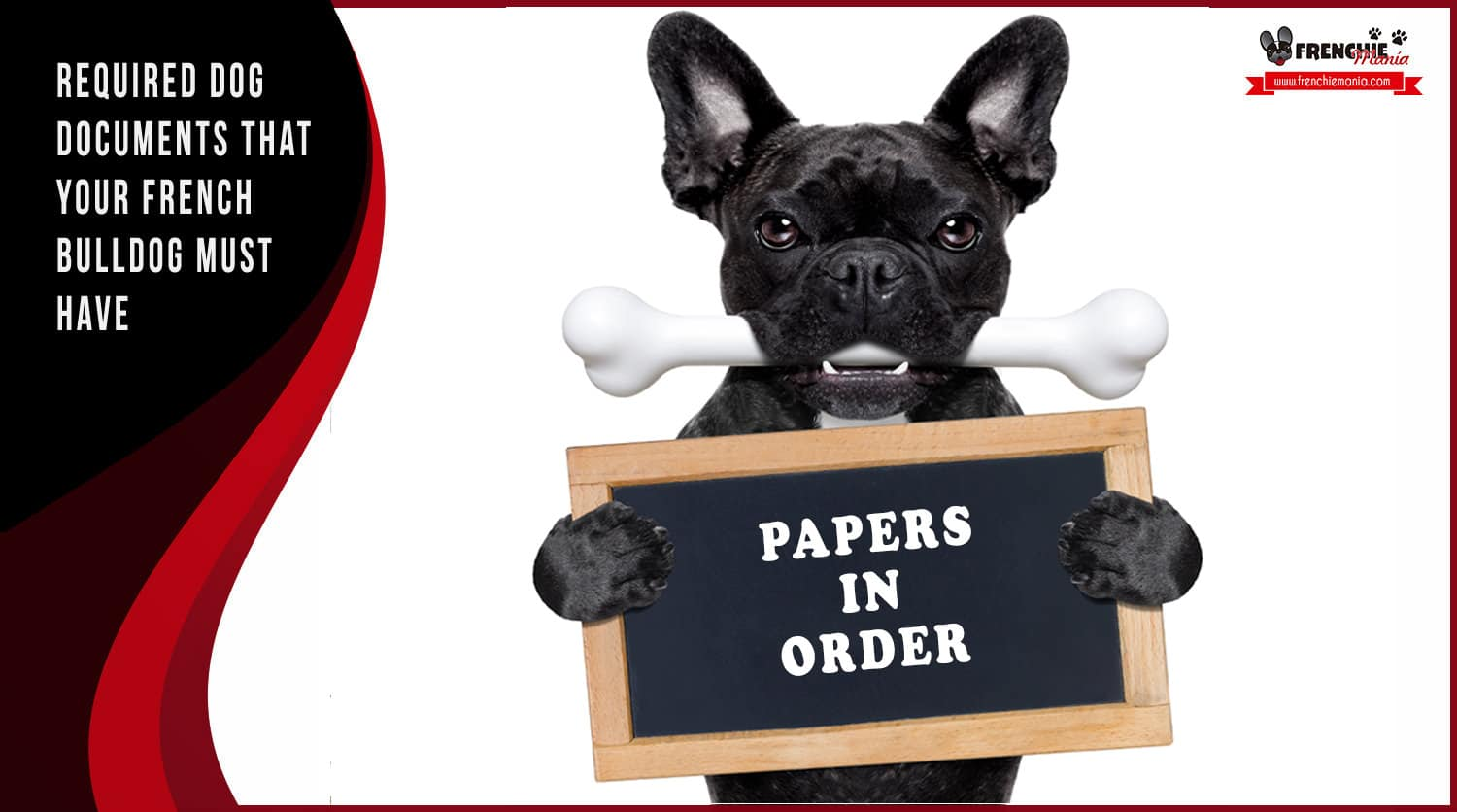 required dog documents