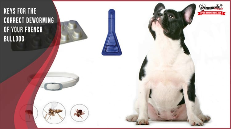deworming dogs
