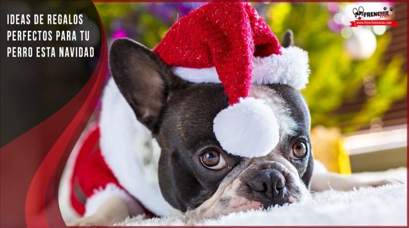 mejores regalos perros navidad bulldog frances